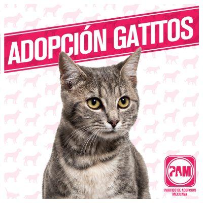 Partido de Adopción Mexicana